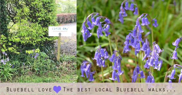 Bluebell love - The best local Bluebell walks…